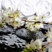 Spa Background Of Zen Stones, Blooming Twig Plum, White Towels With Ripple Reflection On Water, Clos