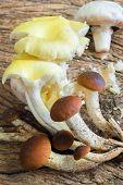 Mix Of Mushrooms