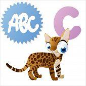 vector animals cartoon abc: C is for cat