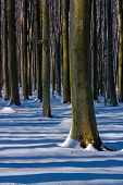 Shadows Of Trees