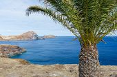 Bare Coast Of Madeira Island With Single Palm Tree