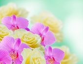 image of yellow orchid  - Pink orchids and yellow roses on the green background - JPG