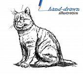 cat sketch illustration
