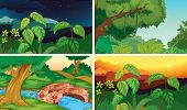 Illustration of four scenes of forests