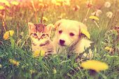 image of puppy kitten  - a cute kitten and a puppy outdoors - JPG