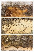 stock photo of honey bee hive  - Three frames of Apis mellifera aka Western or European honey bees - JPG