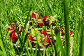 stock photo of strawberry  - juicy strawberry - JPG