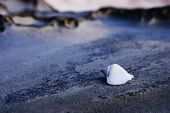 stock photo of conch  - Micro Close up view of Conch shell in white color  - JPG