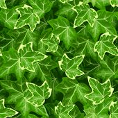 picture of ivy  - Vector seamless pattern with green ivy leaves - JPG