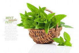 foto of peppermint  - Mint in basket on white background peppermint selective focus close up - JPG