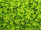 Small Green Leafs Background poster