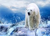 image of water animal  - White Polar Bear Hunter on the Ice in water drops - JPG