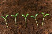 Постер, плакат: Новая жизнь концепция зеленый саженцев растущих из почвы