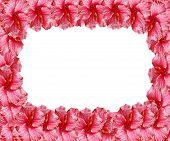Pink Flowers Border Frame