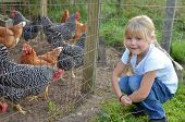 stock photo of farm animals  - Little blond girl with farm chickens in pen - JPG