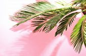 Summer Tropical Travel Concept, The Sun Is Shining Brigtly On A Bunch Of Palm Leaves, Palm Leaves Sh poster