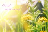 The Inscription Good Morning In The Photo With Yellow Dandelions And Green Grass In Sunlight Against poster