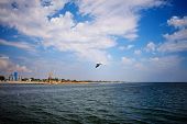 One Seagull Flies Over The Sea On A Wonderful Summer Day poster