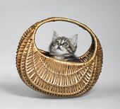 Kitten Looking Up In Small Basket