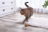 Adorable Striped Cat On Fuzzy White Rug Indoors poster