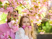 Childhood Concept. Girl With Dad Near Sakura Flowers On Spring Day. Child And Man With Tender Pink F poster