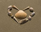 Heart Shells In The Sand