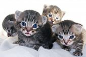 Mother cat and her newborn kittens poster