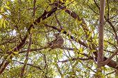 An Australian Koala Bear And Joey In Their Natural Habitat poster