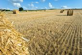 Staw Bales Near Angouleme