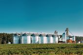 Granary, Grain-drying Complex, Commercial Grain Or Seed Silos In Sunny Summer Rural Landscape. Corn  poster