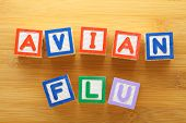 picture of avian flu  - Avian flu toy block - JPG
