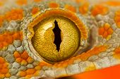 stock photo of gekko  - A macro shot of the eye of a Tokay Gecko