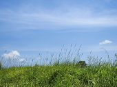 Green Grass Blue Sky Background