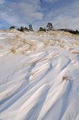 Saugautuck Dunes Winter