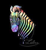 Colored Zebra On Black