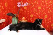 cat on the background of red wall-paper