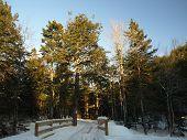 Sombras del bosque de invierno