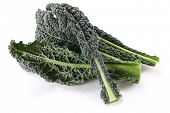 schwarz, Grünkohl, italienischer Kohl, toskanische Kale, lacinato