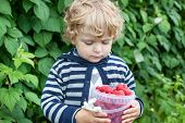 Little Toddler With Raspberry Bucket