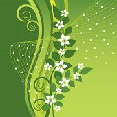 foto of jasmine  - White Jasmine flowers on green swirls and waves background - JPG