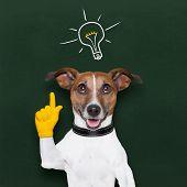 Dog Idea