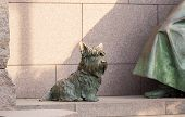 Pet Dog At Roosevelt Memorial Washington Dc