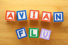 picture of avian flu  - Avian flu toy block - JPG