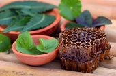 Medicinal Herbs With Honey Comb