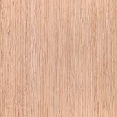 Texture Of Oak, Tree Background
