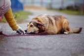 The Red Not Purebred Dog Lies On The Road poster