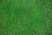 picture of greenery  - Top view angle of green grass meadow - JPG