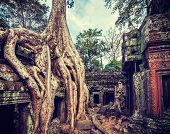 Vintage retro effect filtered hipster style travel image of ancient ruins with tree roots, Ta Prohm
