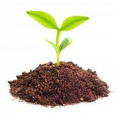 foto of photosynthesis  - Young seedling growing in a soil - JPG