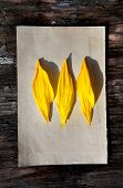 Yellow Petals On Old Paper